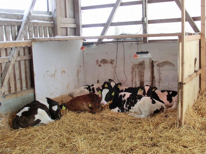 f:id:dairycow2017:20170504001218j:plain