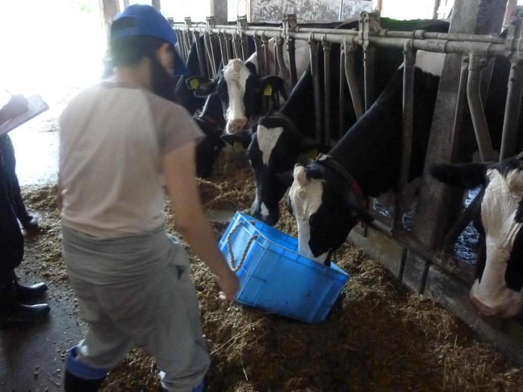 f:id:dairycow2017:20170602165357j:plain