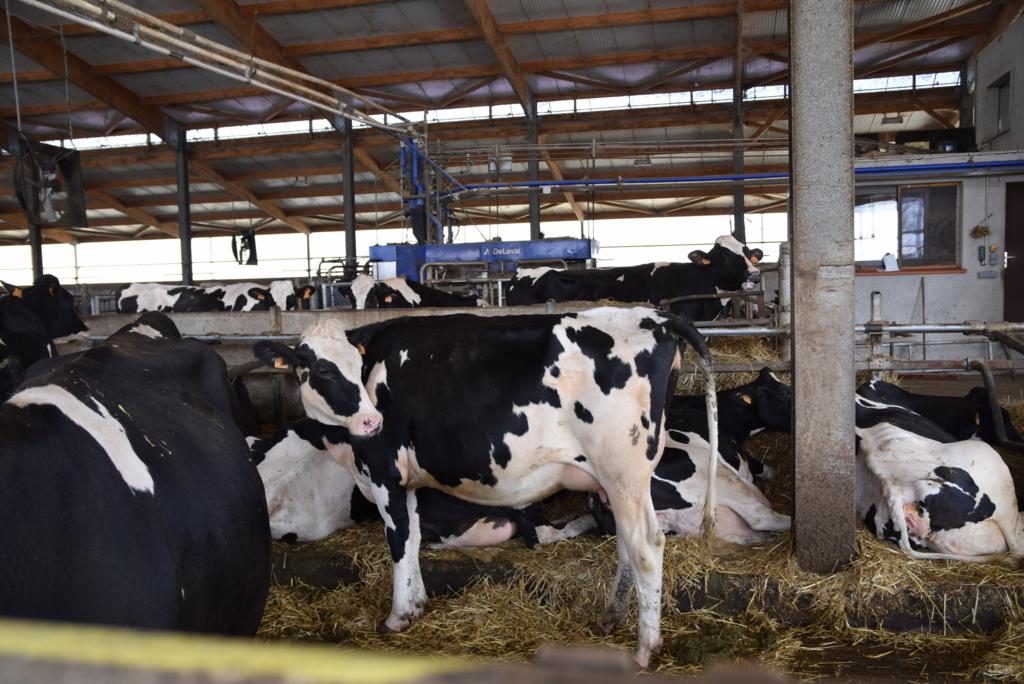 f:id:dairycow2017:20180510182818j:plain