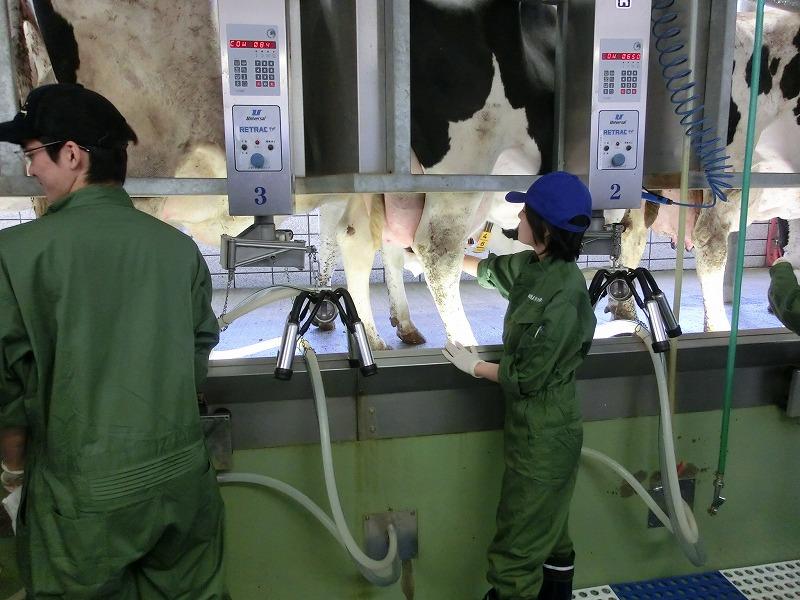 f:id:dairycow2017:20180821160817j:plain