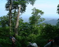大山夏山登山道途中から日本海