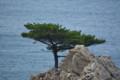 千貫松島の松