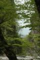 樹木の間から見える金門