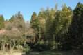 [里山]孟宗竹やぶ伐採