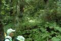 [おひろめウオーク研修]登山道上り口・一部流失した僧坊跡地