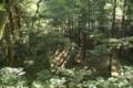 [おひろめウオーク研修]西楽院跡を山側から見下ろす