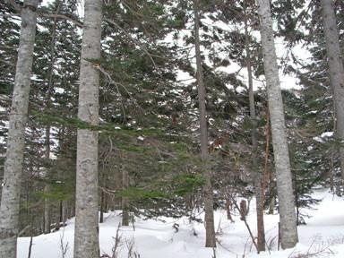 f:id:daisetsuzan:20100129163833j:image