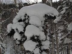 f:id:daisetsuzan:20100218164136j:image