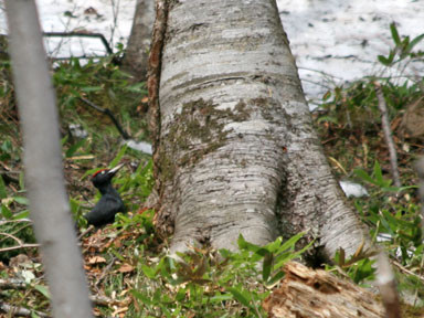 f:id:daisetsuzan:20100506180738j:image:w240