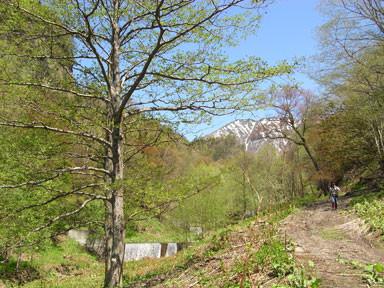 f:id:daisetsuzan:20100529211546j:image