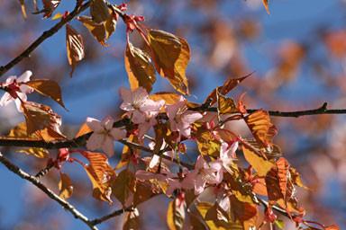 f:id:daisetsuzan:20100529211549j:image:w240