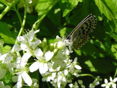 f:id:daisetsuzan:20100618201212j:image:w240