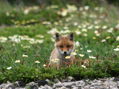 f:id:daisetsuzan:20100711213051j:image