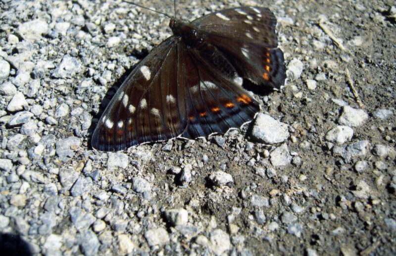 f:id:daisetsuzan:20100724142058j:image:w240