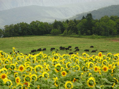 f:id:daisetsuzan:20100813190626j:image:w240