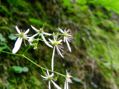 f:id:daisetsuzan:20100818212728j:image