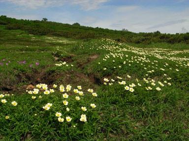 f:id:daisetsuzan:20100820214037j:image