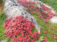f:id:daisetsuzan:20100914215413j:image