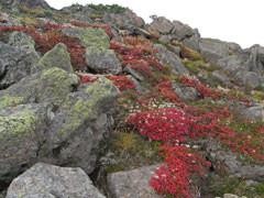 f:id:daisetsuzan:20100914220821j:image