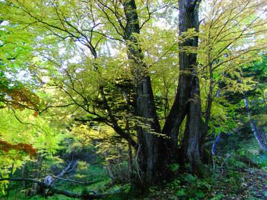 f:id:daisetsuzan:20101006192000j:image