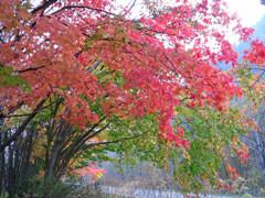 f:id:daisetsuzan:20101012151924j:image