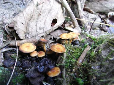 f:id:daisetsuzan:20101105174122j:image:w240
