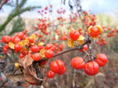 f:id:daisetsuzan:20101112172524j:image:w240