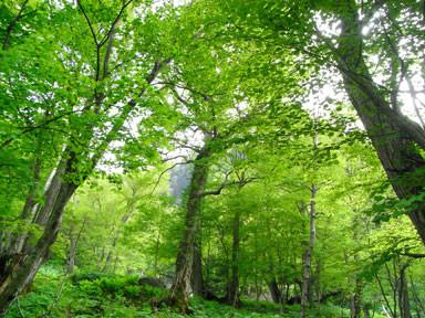 f:id:daisetsuzan:20110613185136j:image