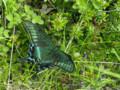 f:id:daisetsuzan:20110726201143j:image:medium
