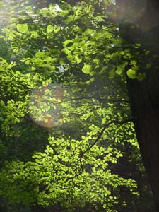 f:id:daisetsuzan:20110729190747j:image