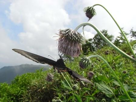 f:id:daisetsuzan:20110804131401j:image:w360