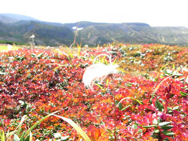 f:id:daisetsuzan:20110915183234j:image:w240