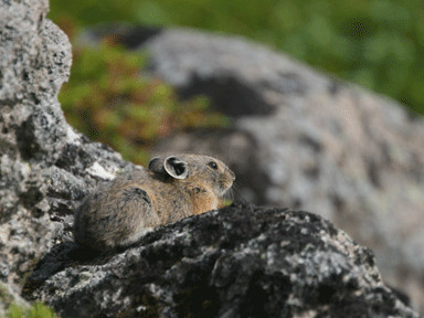 f:id:daisetsuzan:20120723181125j:image