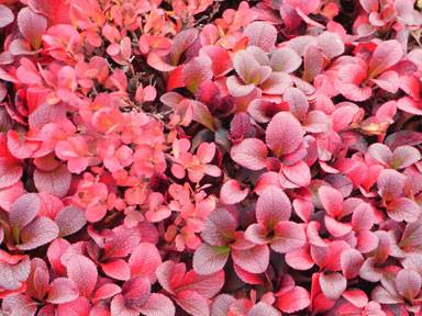 f:id:daisetsuzan:20120927124450j:image:w240:w240