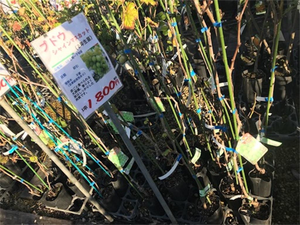 f:id:daisodaisuki:20180926205651j:image