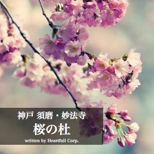桜の杜イメージ画像