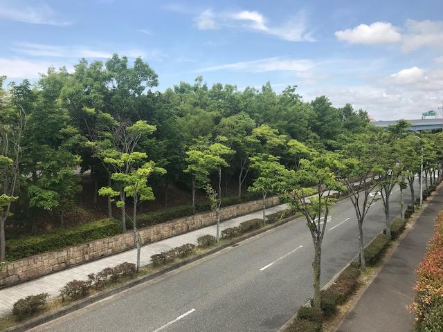 f:id:daisukeshima:20190608183325j:plain