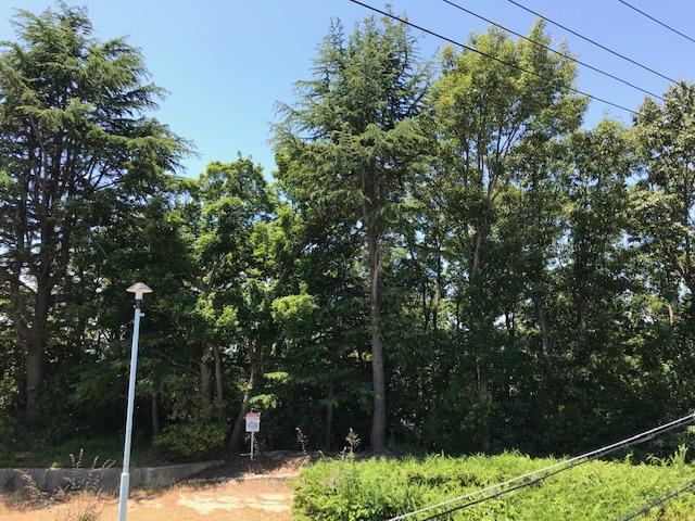 f:id:daisukeshima:20190625144743j:plain
