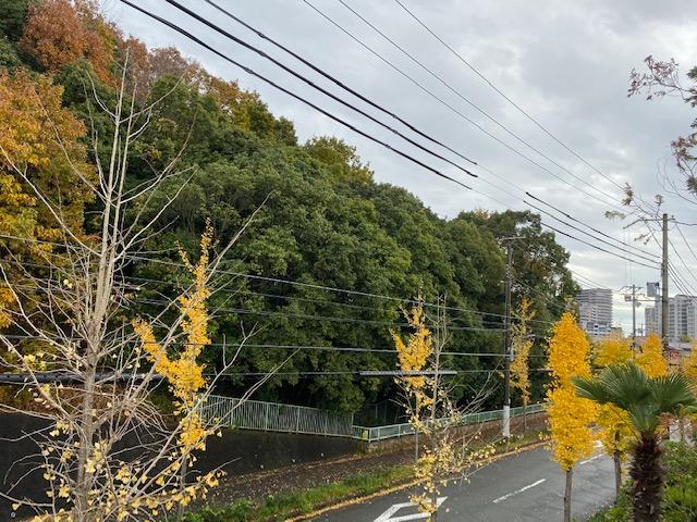 f:id:daisukeshima:20191203174724j:plain