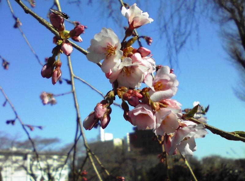 f:id:daisukiibaraki:20110406082431j:image