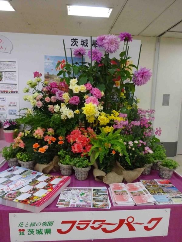 f:id:daisukiibaraki:20150130112700j:image:w640