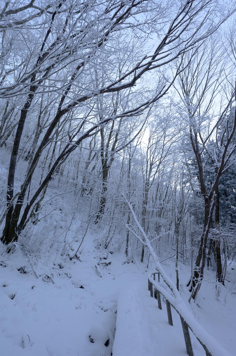 f:id:daitai_Iro:20210112193834j:plain