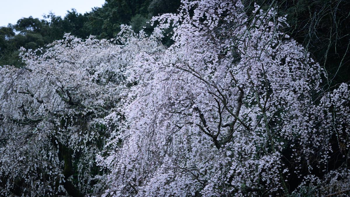 f:id:daitai_Iro:20210401221524j:plain
