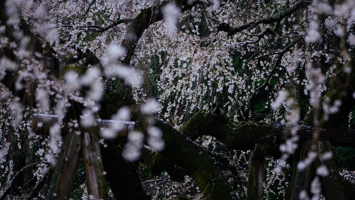 f:id:daitai_Iro:20210401221818j:plain