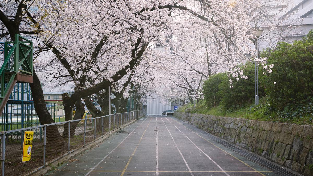 f:id:daitai_Iro:20210402191454j:plain