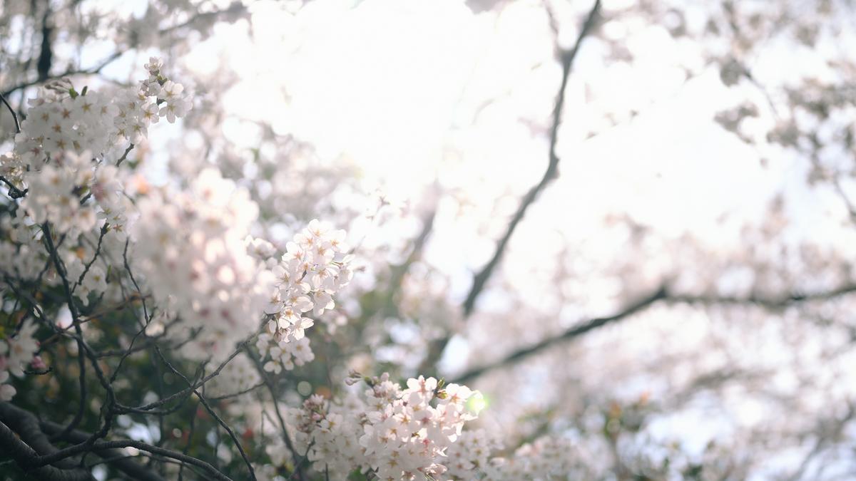 f:id:daitai_Iro:20210402192204j:plain
