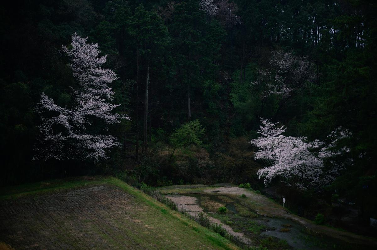 f:id:daitai_Iro:20210402193902j:plain