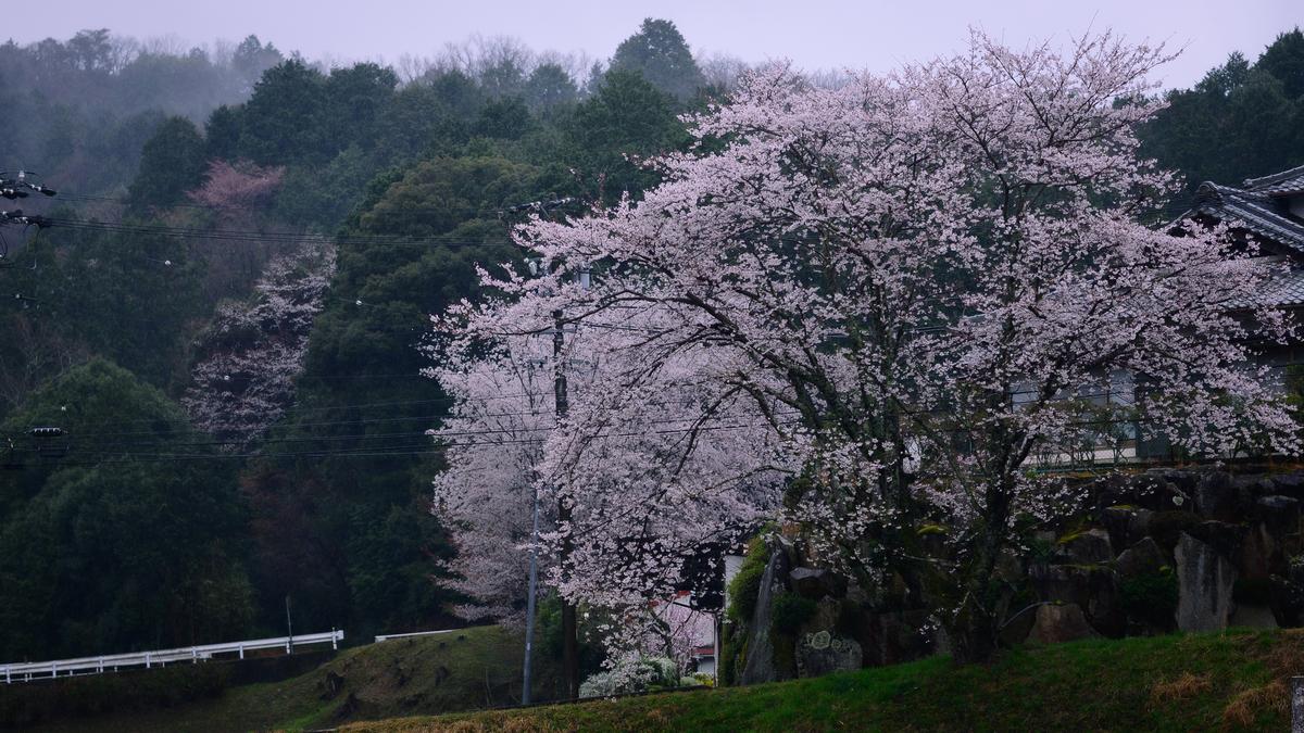 f:id:daitai_Iro:20210402194946j:plain