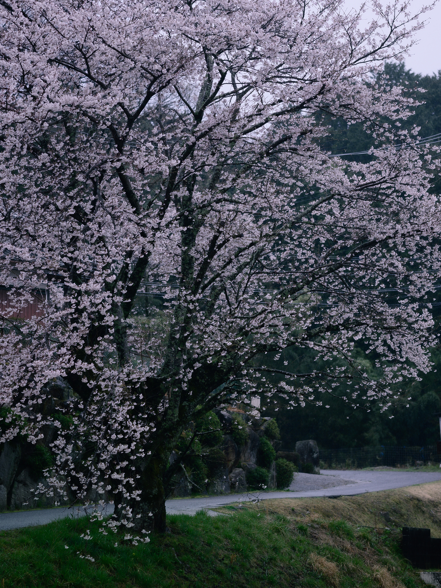 f:id:daitai_Iro:20210402195015j:plain