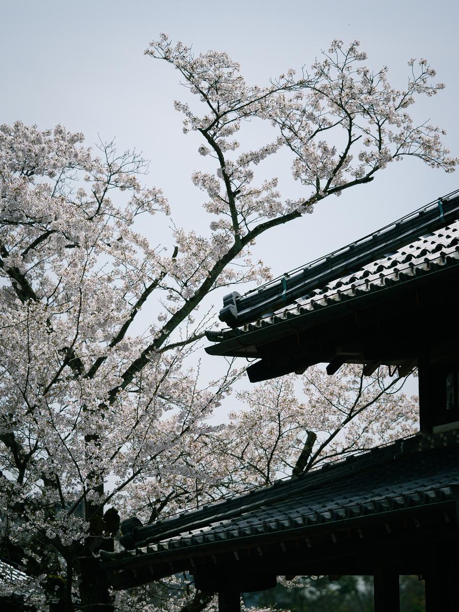 f:id:daitai_Iro:20210402210813j:plain